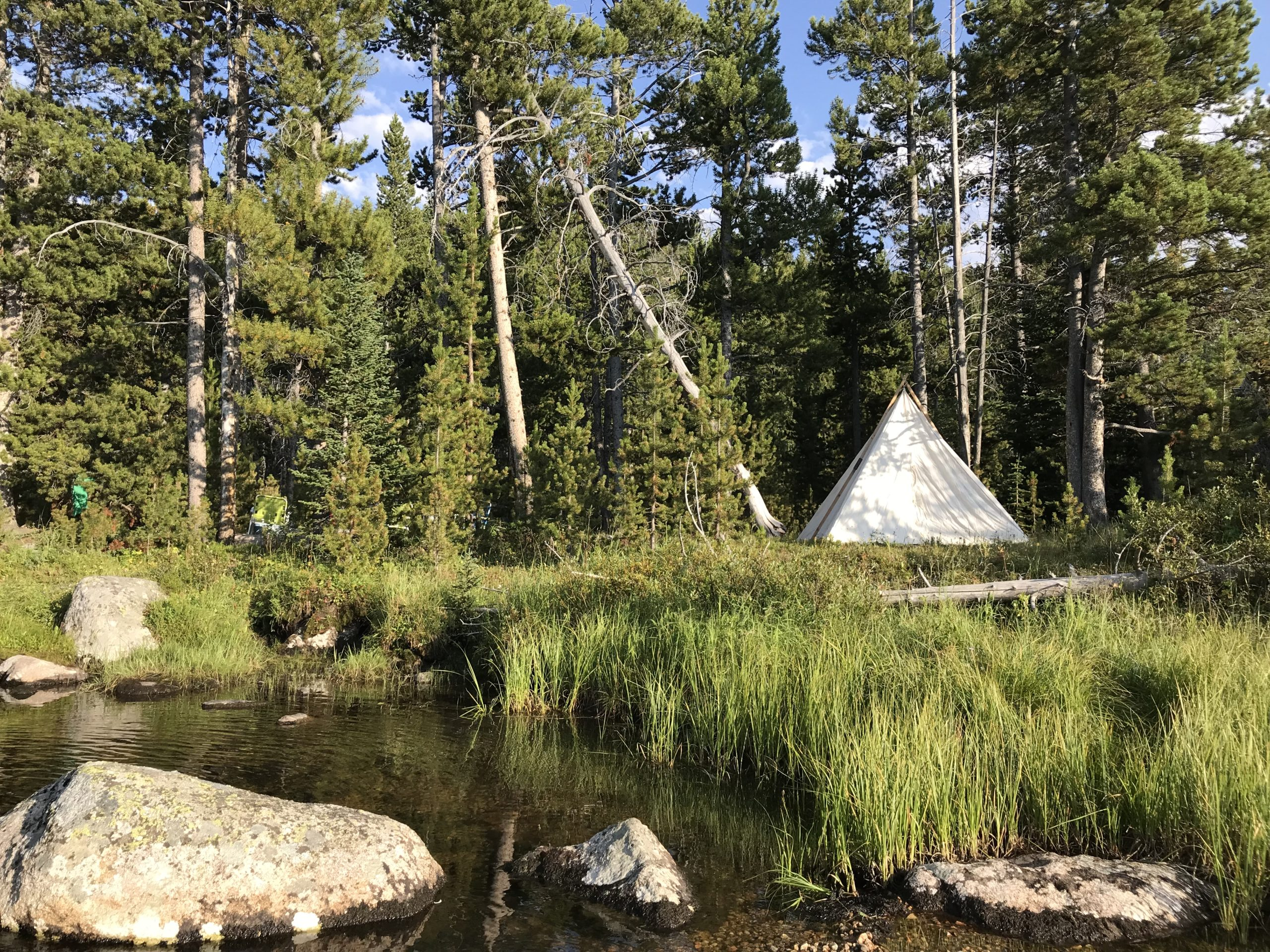 How to Safely Observe Animals While Out Camping